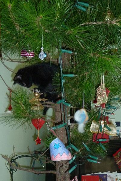 Ninja-tree-2011